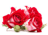 Red rose flower bouquet isolated on white background cutout — Fotografia Stock