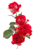 Bouquet of red roses flower — Stock Photo