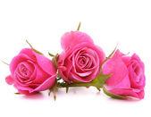 Ramo de flor rosa rosa — Foto de Stock