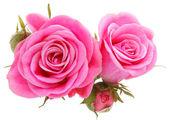 Bouquet de fleur rose rose — Photo