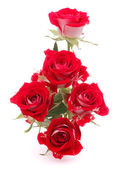 Red rose flower bouquet isolated on white background cutout — Stock Photo