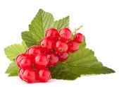 красная смородина и зеленые листья — Стоковое фото
