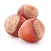 Hazelnut or filbert nut isolated on white background cutout — Stock Photo