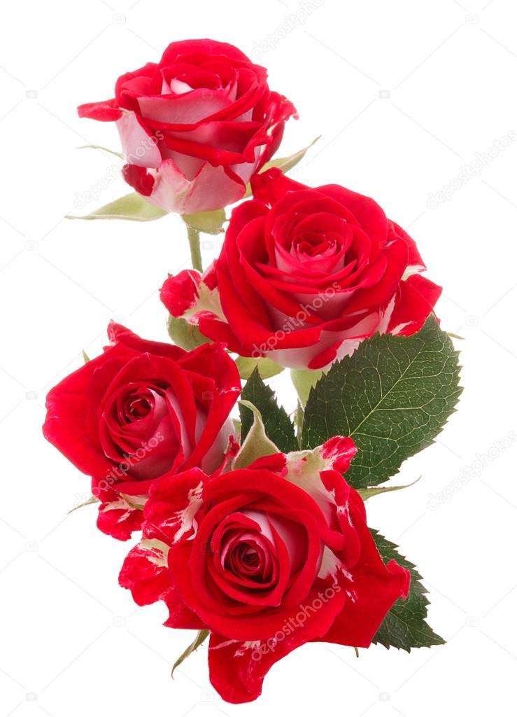 Bouquet de fleurs rose rouge photo 46905519 for Bouquet de fleurs 24h