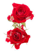 Red rose flower bouquet isolated on white background cutout — ストック写真
