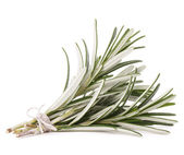 Rosemary herb spice leaves — Stock Photo