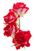Red rose flowers bouquet — Stockfoto