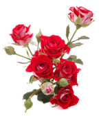 Red rose flower bouquet — Stock Photo