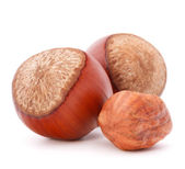 Hazelnut or filbert nut — Stock Photo