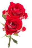 Bouquet de fleurs rose rouge — Photo