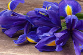 Blueflag or iris flower — Stock Photo