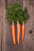 Fresh carrots bunch — Stock Photo