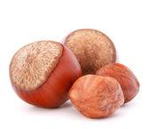 Hazelnuts or filbert nuts — Stock Photo