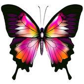 Farfalla — Vettoriale Stock