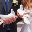 Wedding white pigeons — Stock Photo
