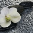 Stock Photo: White orchid flower over wet surface with reflection