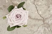 Kwiat róży na tło grunge — Zdjęcie stockowe