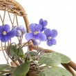 Stock Photo: Purple violet flowers in a pot on a rocking wicker chair