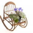 Purple violet flowers in a pot on a rocking wicker chair — Stock Photo #41031759