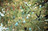 秋の木にはカラフルな葉 — ストック写真