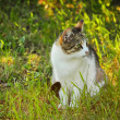 Stock Photo: Stray Cat