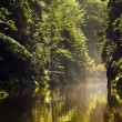 Kamenice River - Stock Photo