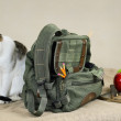 Cat And Backpack - Zdjcie stockowe