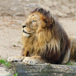 Lion On Sand — Stock Photo #19146127