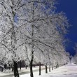 Stock Photo: Winter Alley