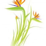 Bird of Paradise Flower (Strelitzia) — Stock Vector