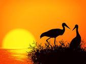 Stork Nest — Stock Vector