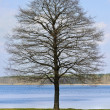 Bare Tree — Stock Photo #27766839