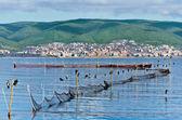Cormorants on fishnets — Stock Photo