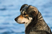 Portret van hond — Stockfoto