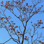 Bare Tree — Stock Photo