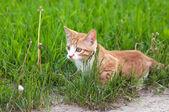 Little kitten hunting — ストック写真