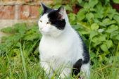 Backyard cat — Stock Photo