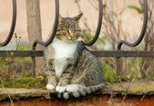 Cat on a fence — 图库照片