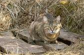 Serios cat portrait — Stock Photo