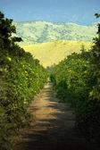 人工林谷 — 图库照片