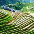 Terrace rice field and mountain view — Stock Photo #29880357
