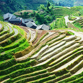 Terrace rice field and mountain view — Stock Photo