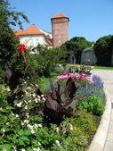 Cama floreciente en wawel (cracovia, polonia) — Foto de Stock