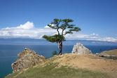 Tall med minne band nära shamanka rock, bajkalsjön, ryssland — Stockfoto