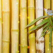 Bamboo — Stock Photo #13515914