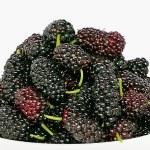 Ripe juicy blackberries — Stock Photo