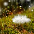 Stock Photo: Plume end moss