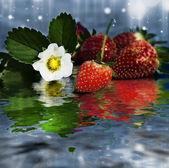 Fresas frescas rojas — Foto de Stock