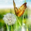 One dandelion — Foto de Stock