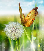 One dandelion — Stock Photo